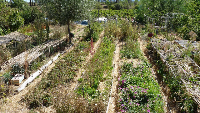 Earth,  Humanism and agroecology: Our visit to the Ardèche agroecologists