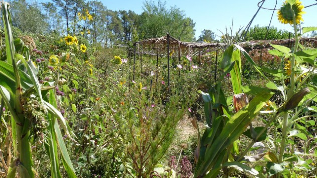 Wild garden of agroecology