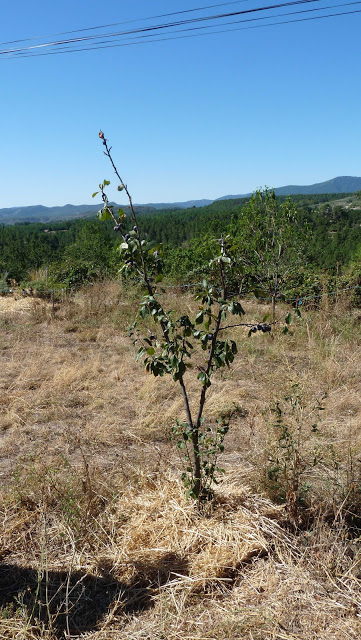 agroecology and plums
