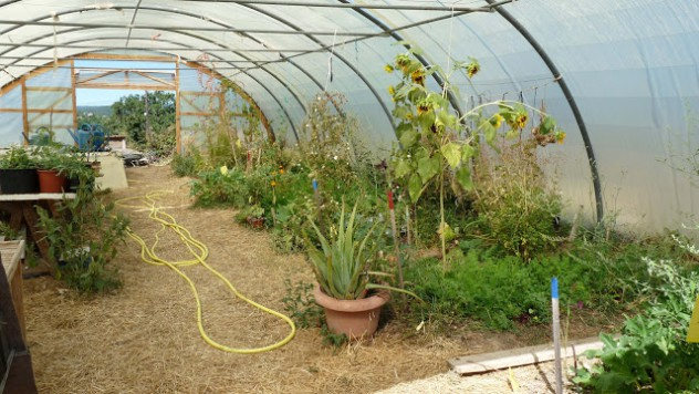 agroecology in greenhouse